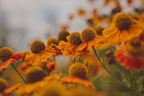 Gratis stockfoto met bij, blad, bloem
