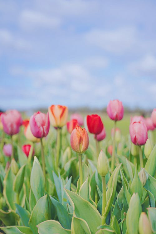 Free stock photo of bright, color, easter
