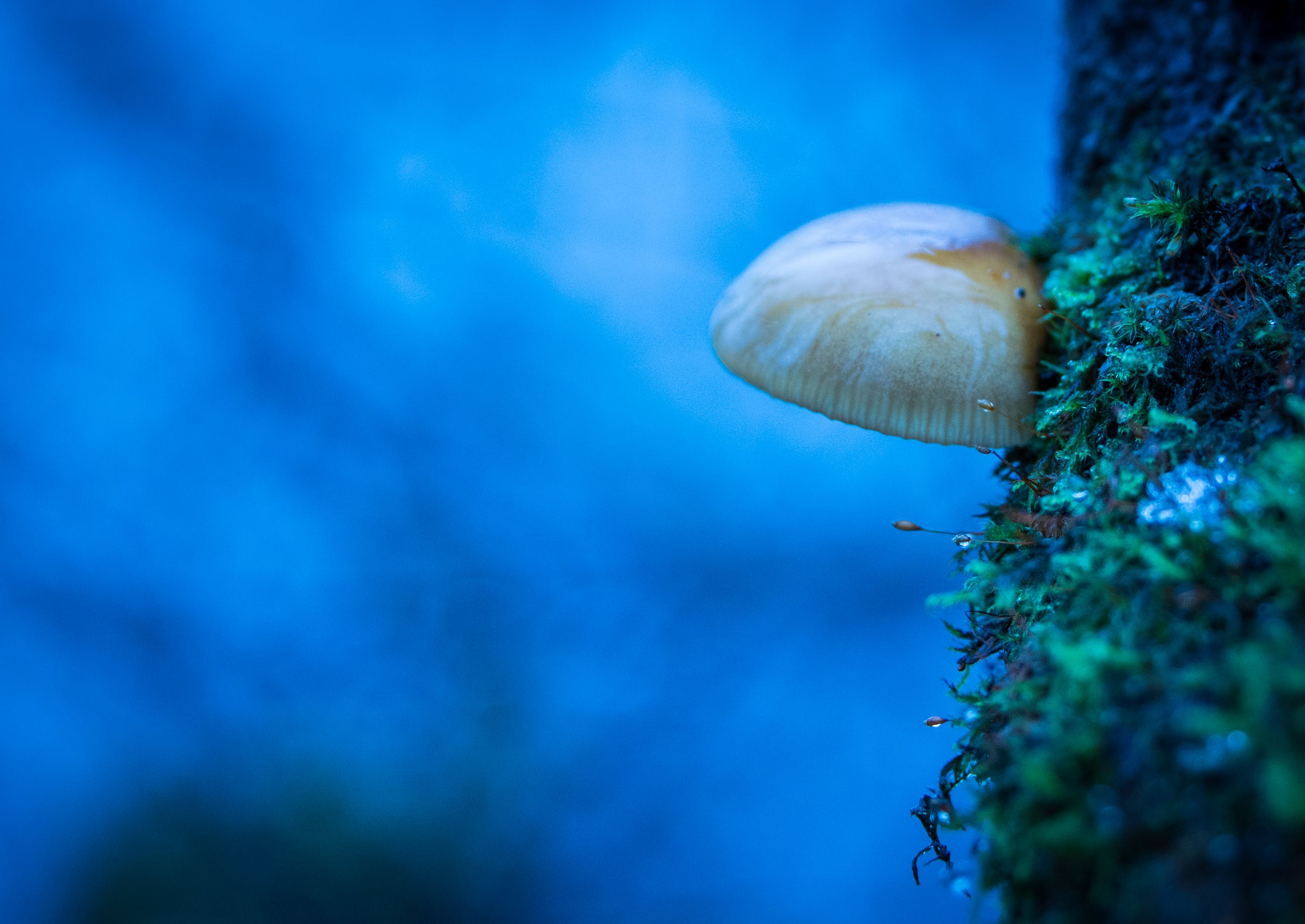 Free stock photo of blue, moss, blur, color