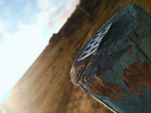 Free stock photo of blur, chafer, nature, sun