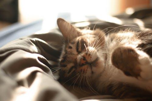 Free stock photo of cat, cats, cute