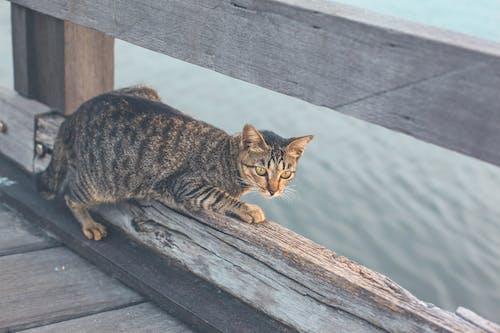 Free stock photo of animal, cat, cats