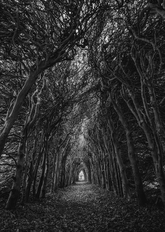 Trees In Grayscale Photography