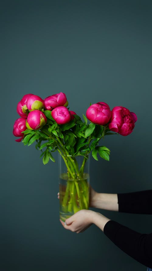 Faceless woman showing blossoming peony bouquet in vase