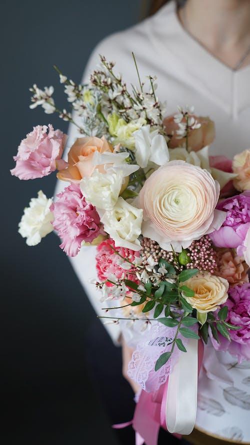 คลังภาพถ่ายฟรี ของ angiosperms, faceless, rosaceae