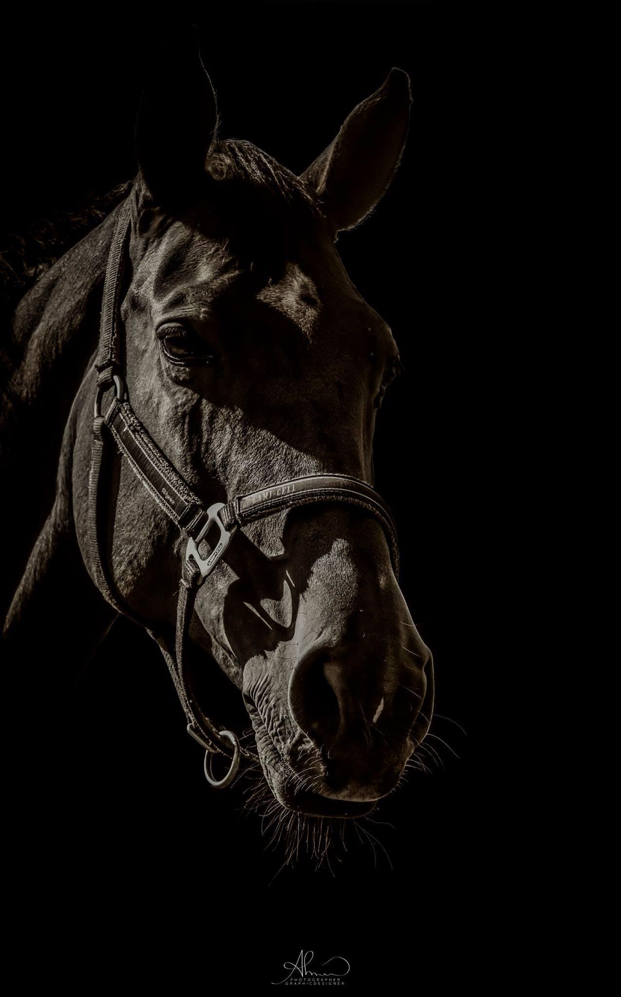 Free stock photo of animal, animal photography, animal portrait, animal world