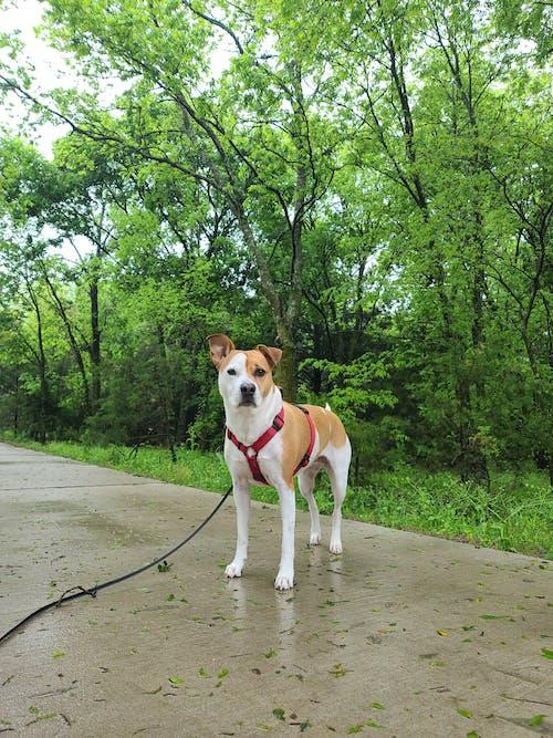Free stock photo of animal, beautiful, dog