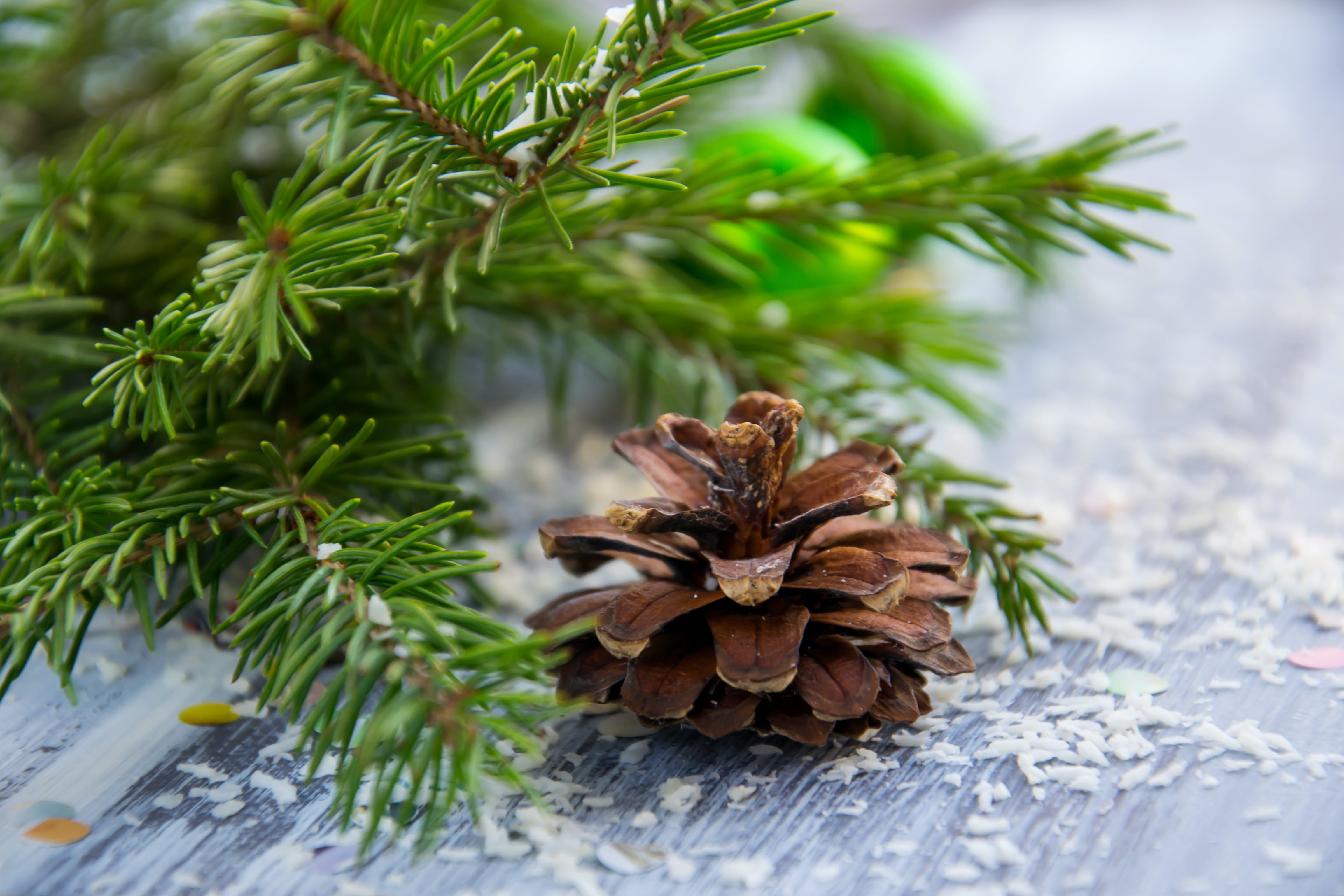 Brown Pine Cone With Pine Tree Leaves Shallow Focus Photography