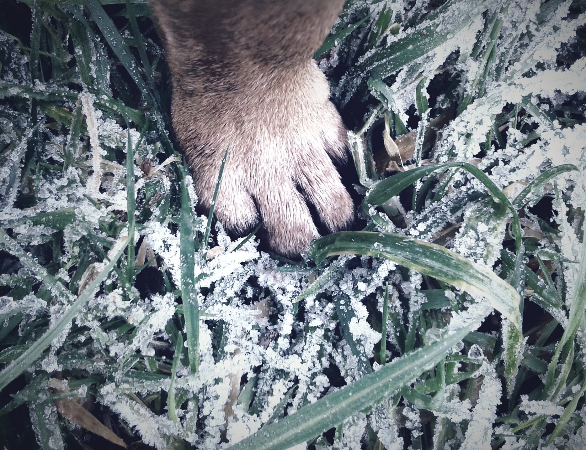 Paw On Green Grass