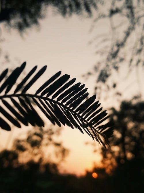 Immagine gratuita di alba, chiarore del sole, sole della sera, sole dorato