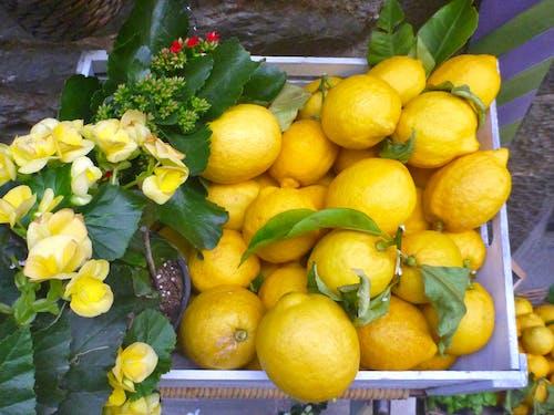 Ingyenes stockfotó citrom, sárga témában