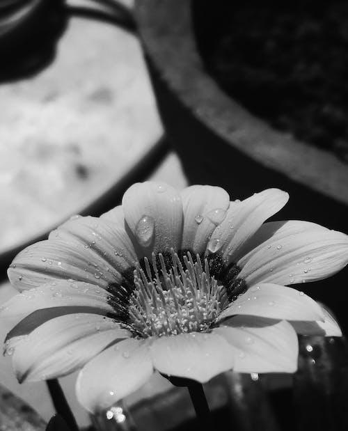 damla, güneşli, güneşli gün, güzel çiçekler içeren Ücretsiz stok fotoğraf
