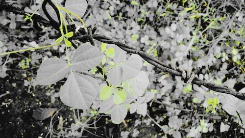 sarı, sınır, yeşil içeren Ücretsiz stok fotoğraf