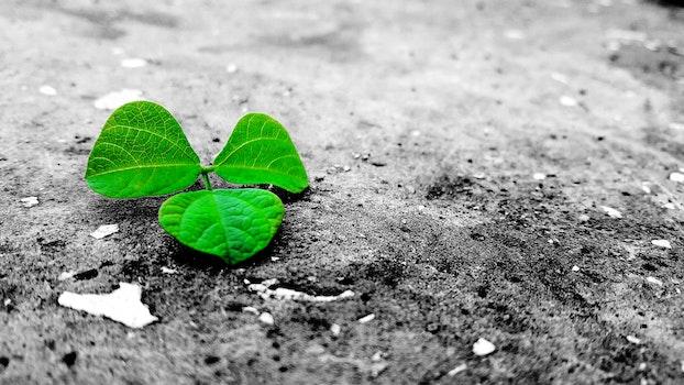 Green Leaf On Grey Ground