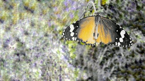 altın sarısı, çiçek üstünde kelebek, kelebek içeren Ücretsiz stok fotoğraf
