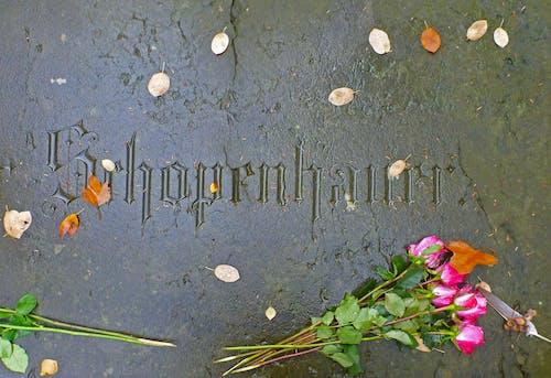 Ingyenes stockfotó arthur schopenhauer sírja, schopenhauer, sír témában