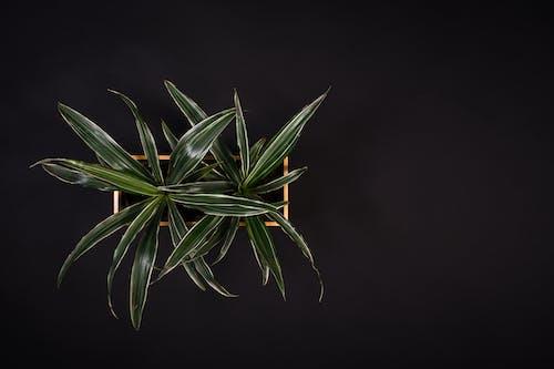 Gratis stockfoto met abstract, abstracte vormen, blad