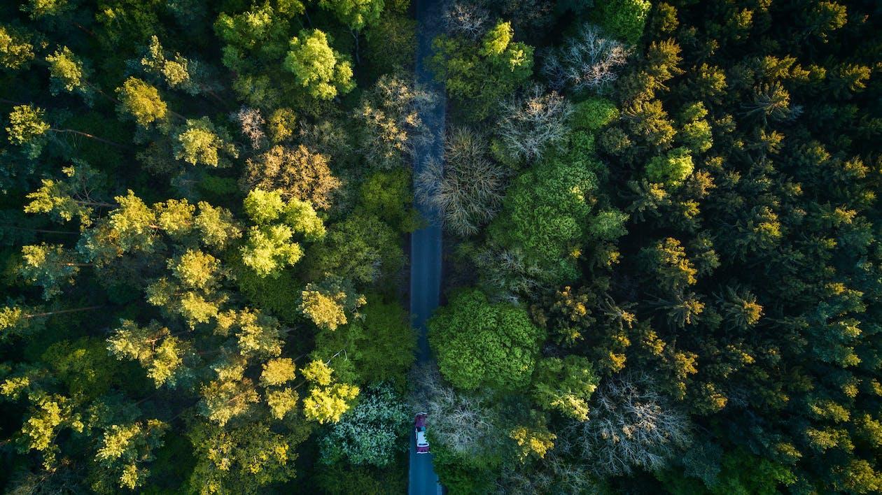 dron, drzewa, las