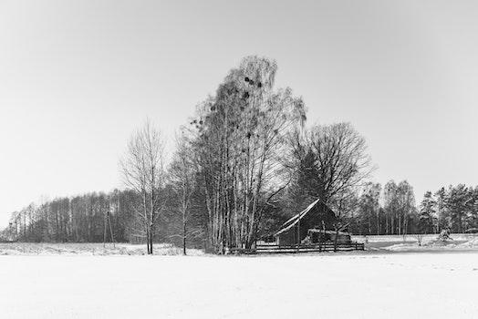 Free stock photo of snow, wood, sky, trees
