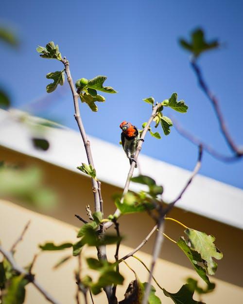 Free stock photo of bird, bird chirping, bird sitting