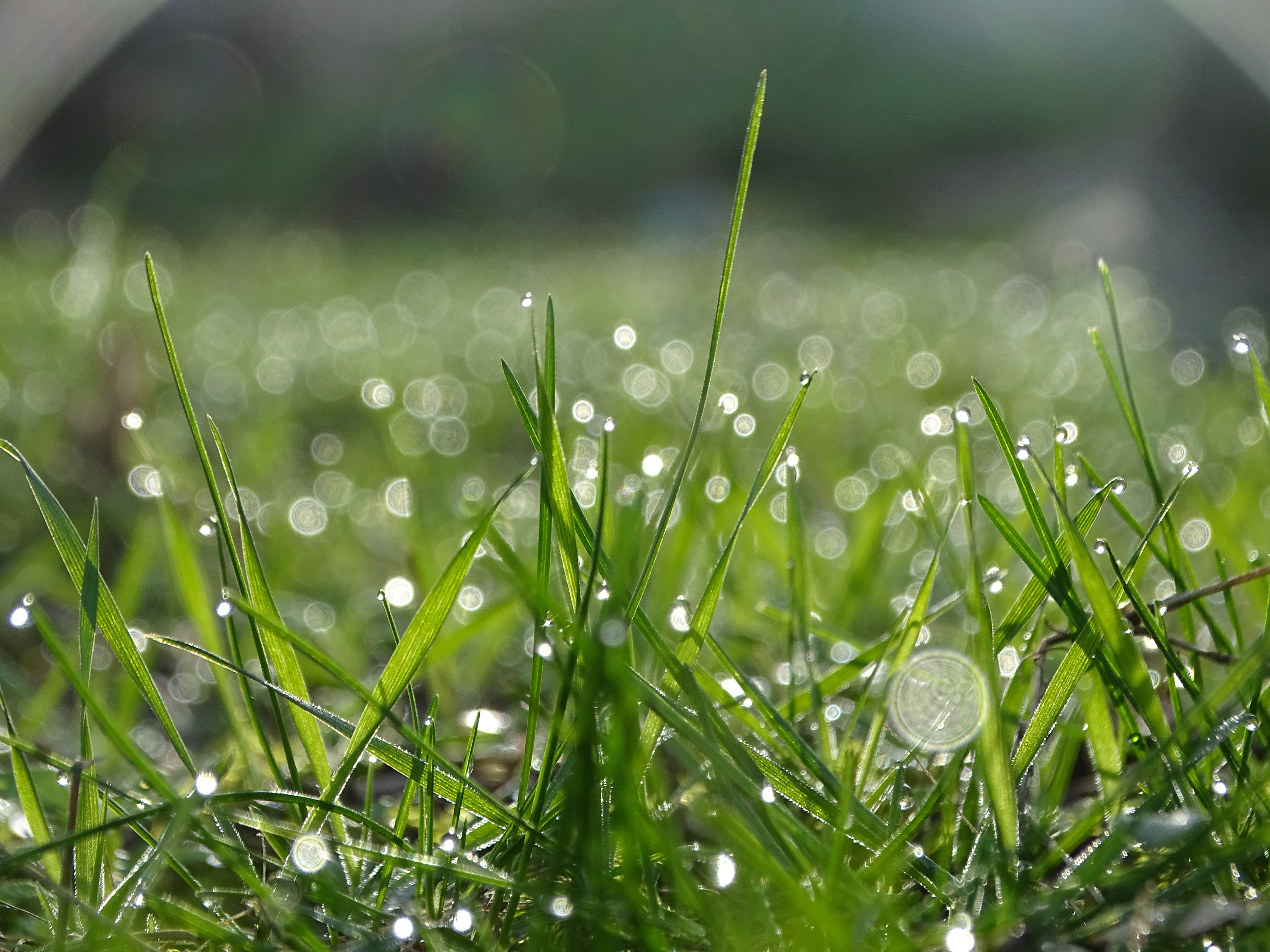 Shallow Focus of Raindrops On Green Grass