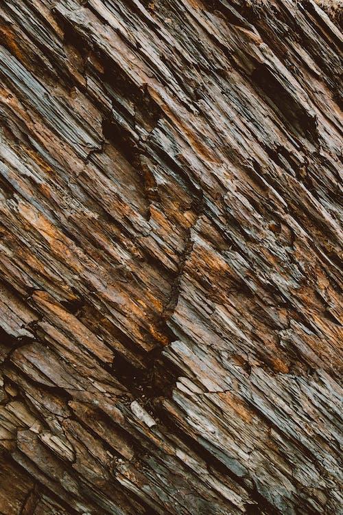 Close-Up Shot of a Wood