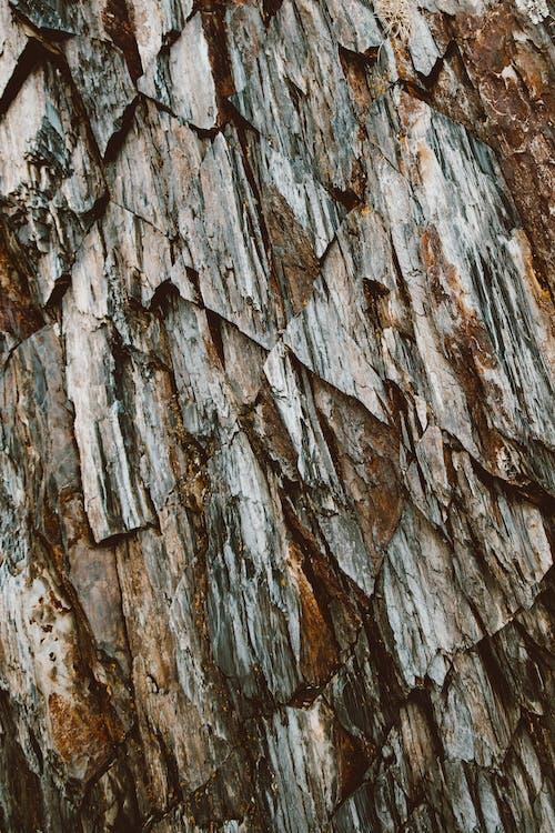 Close-Up Shot of a Tree Bark