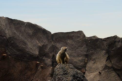 Ilmainen kuvapankkikuva tunnisteilla eläin, kallio, kiivetä, kivimuodostelma