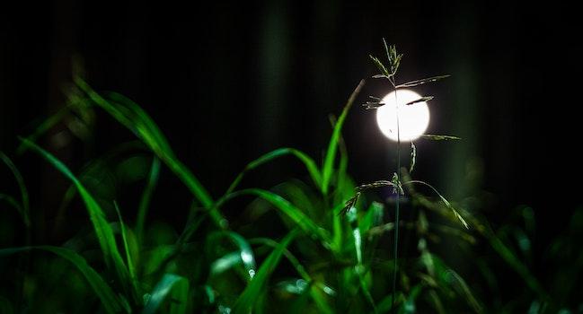 Free stock photo of night, grass