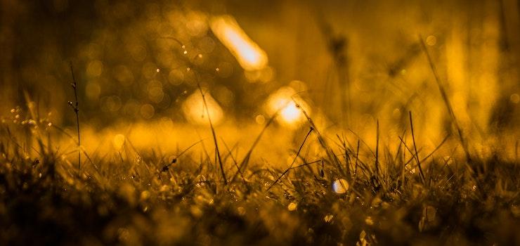Free stock photo of landscape, sunset, field, grass