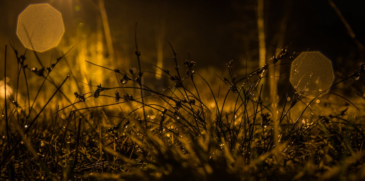 Photography of Grasses during Nighttime