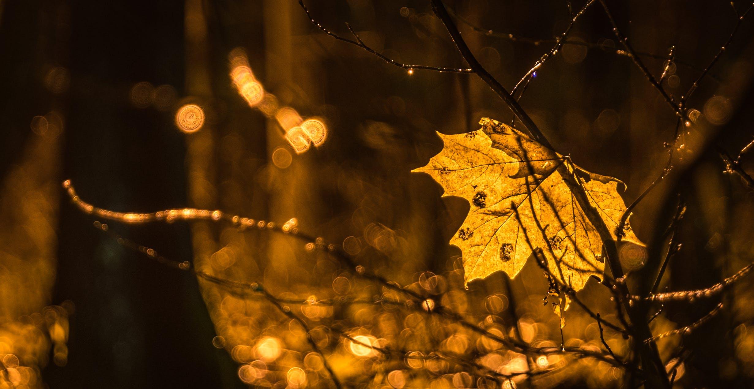 ağaç gövdeleri, ağaçlar, akçaağaç yaprağı, bulanık arka plan içeren Ücretsiz stok fotoğraf