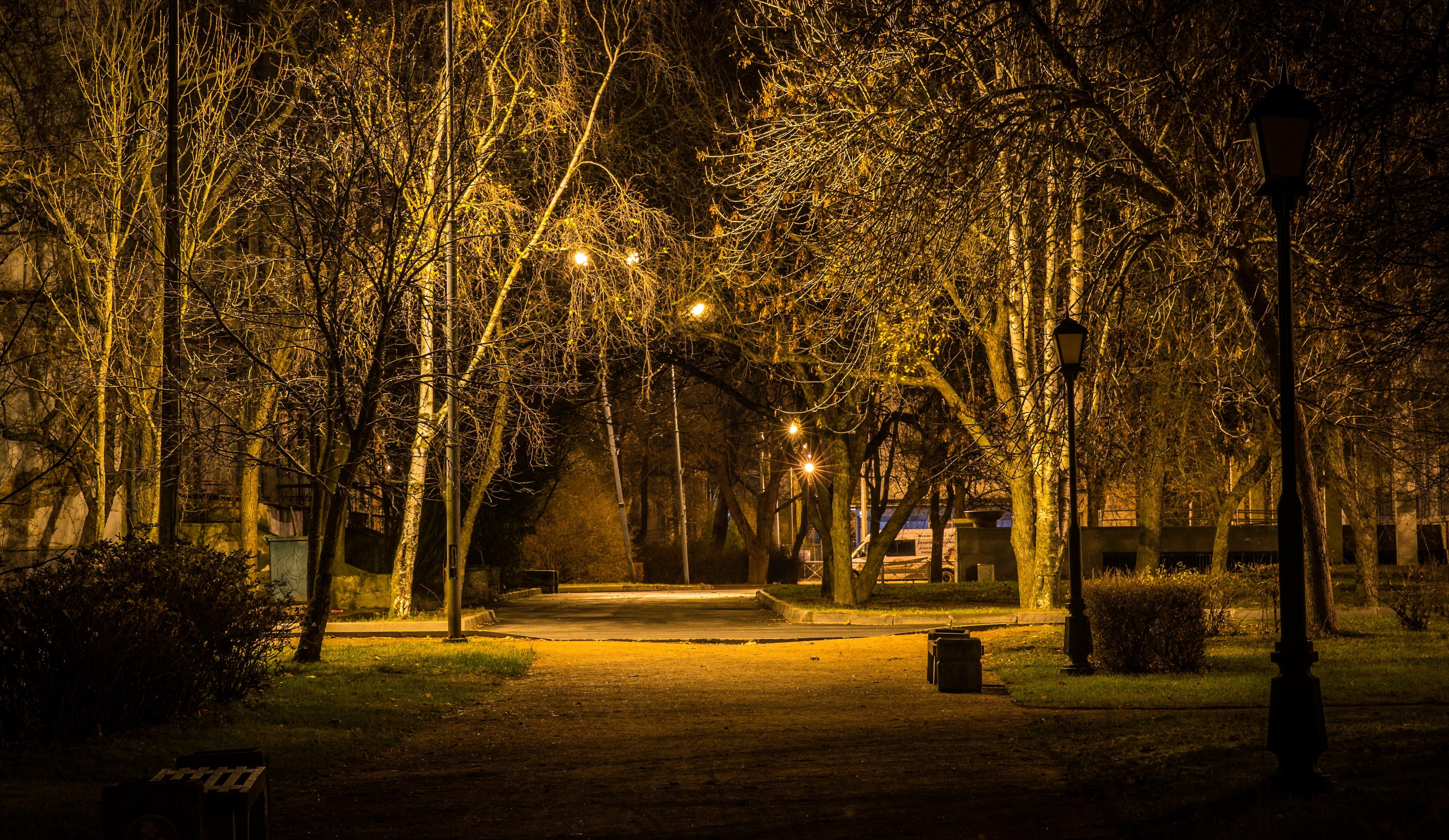 city park, landscape, night