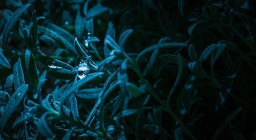 Foto profissional grátis de cores, ecológico, folhas, fotografia de pequenos seres