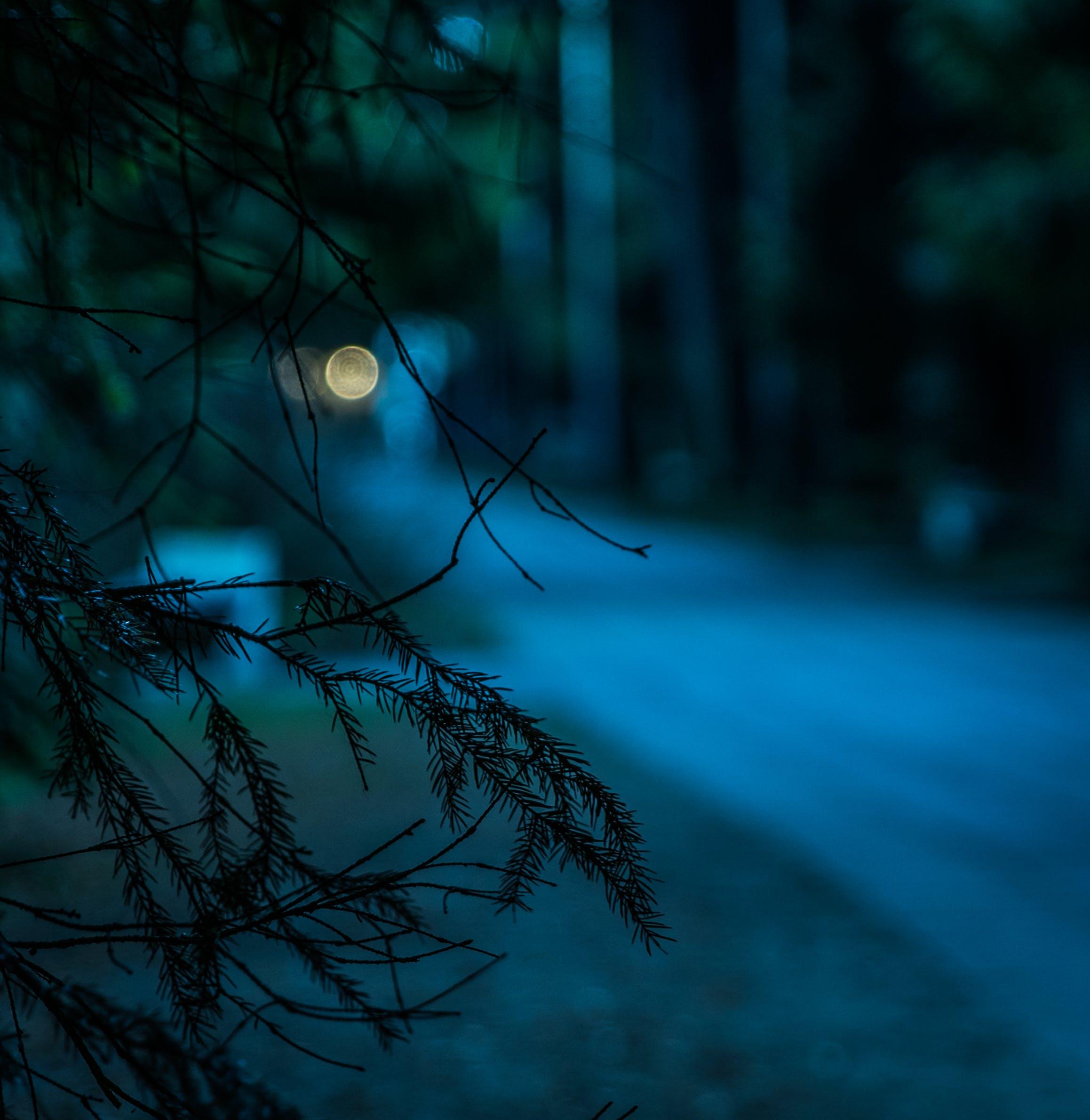 Kostenloses Stock Foto zu licht, straße, landschaft, nacht