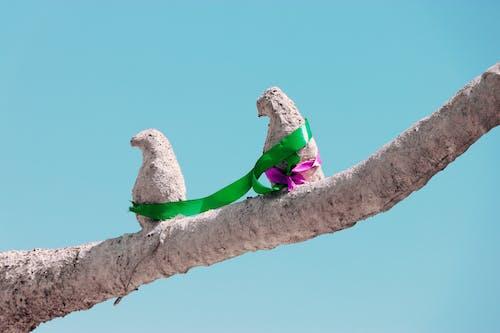 Free stock photo of bird, iran, politics