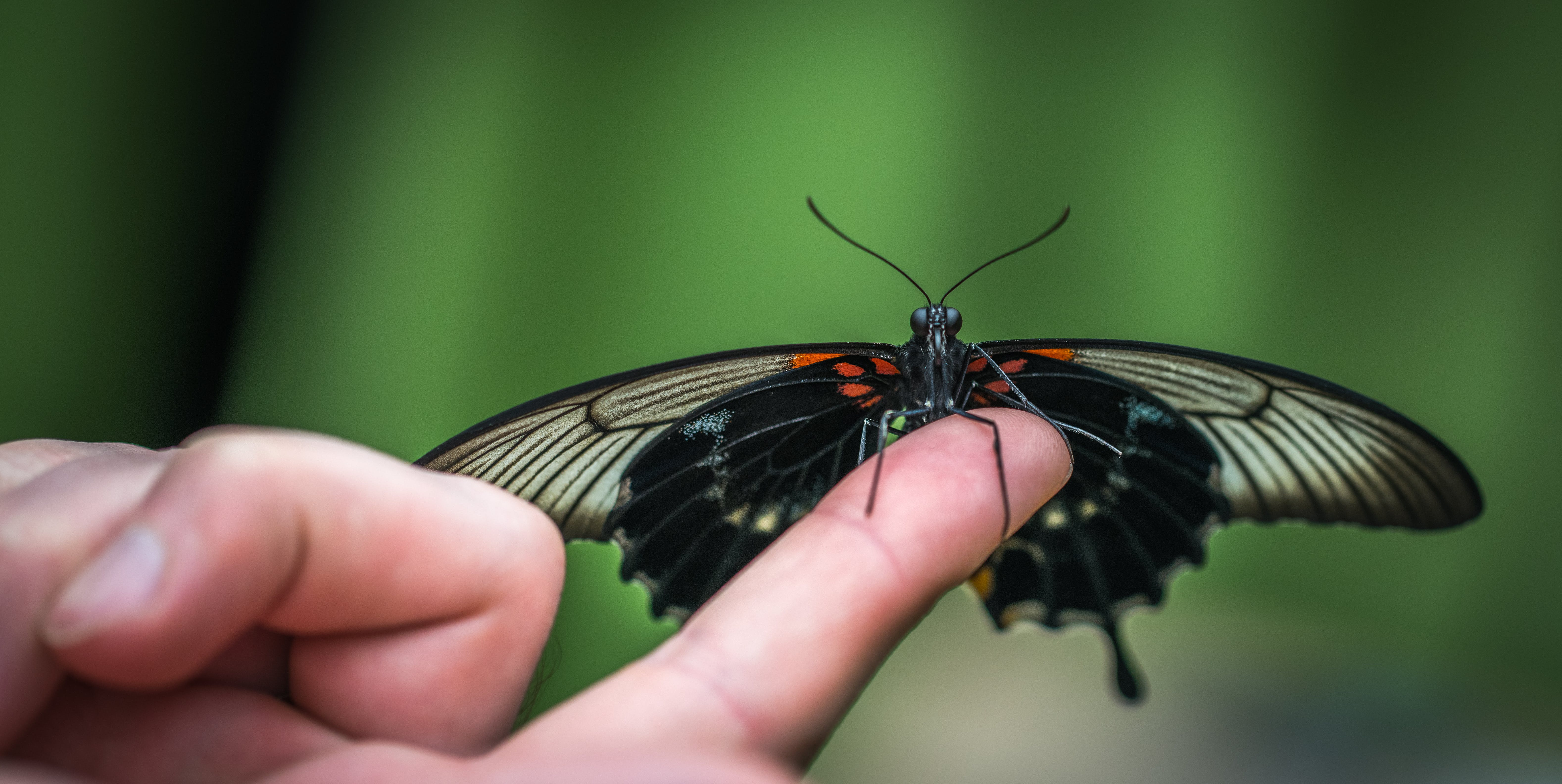 Shallow Focus Photograph of Black Butterfly on Person's Index Finger