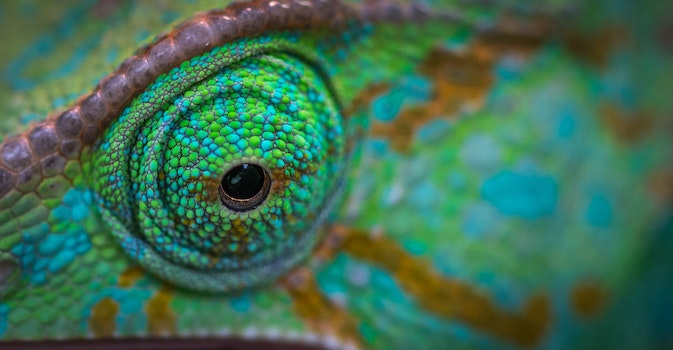 Green Animal Eye