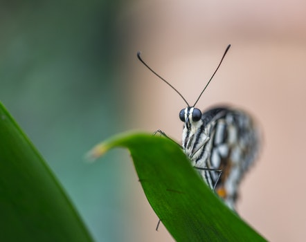 Selective Focus Photo of Gray and Black Butterfly