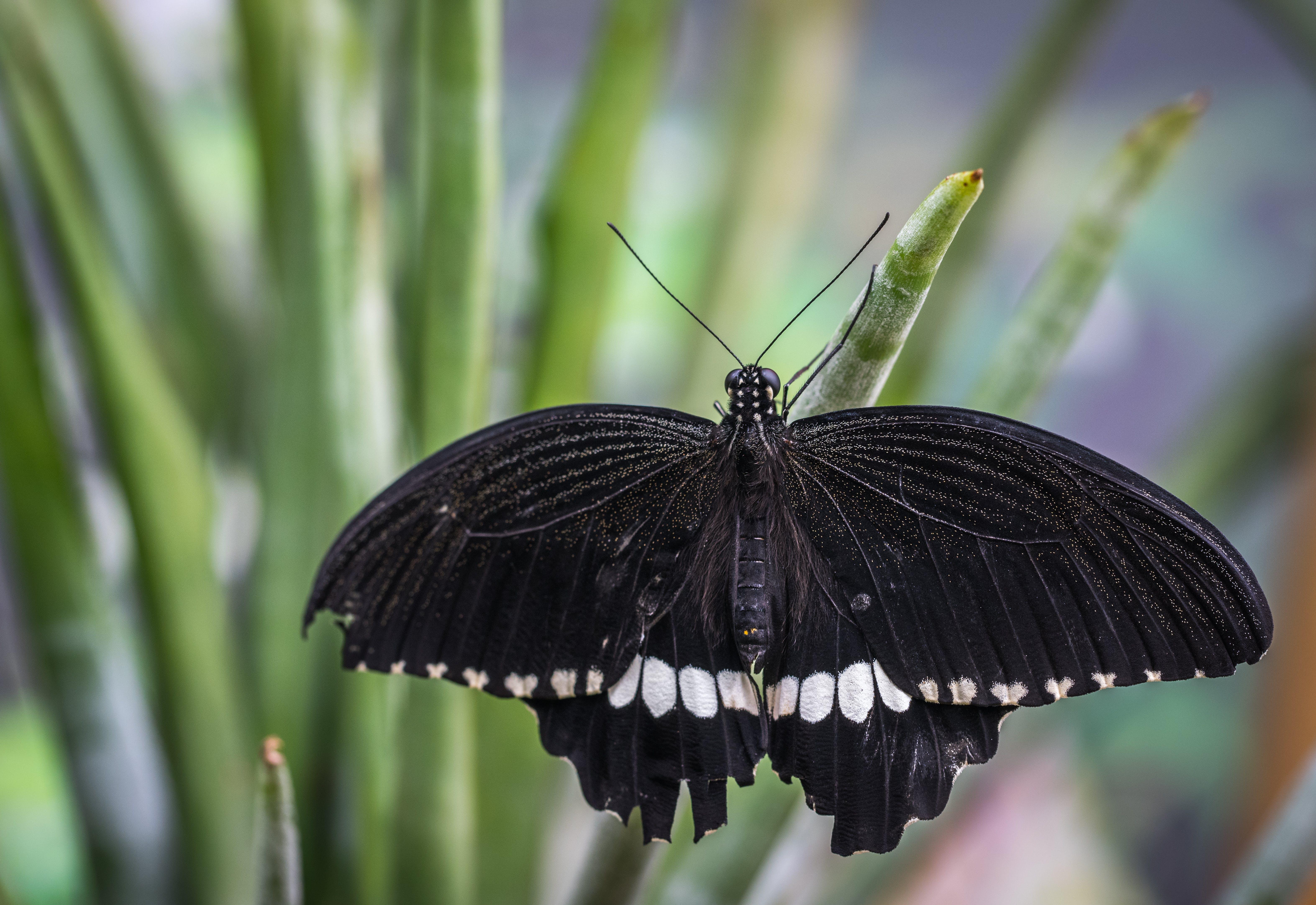 Fotos de stock gratuitas de alas, animal, biología, blanco y negro