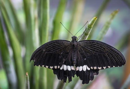 Fotografía De Enfoque Superficial De Mariposa En Blanco Y Negro