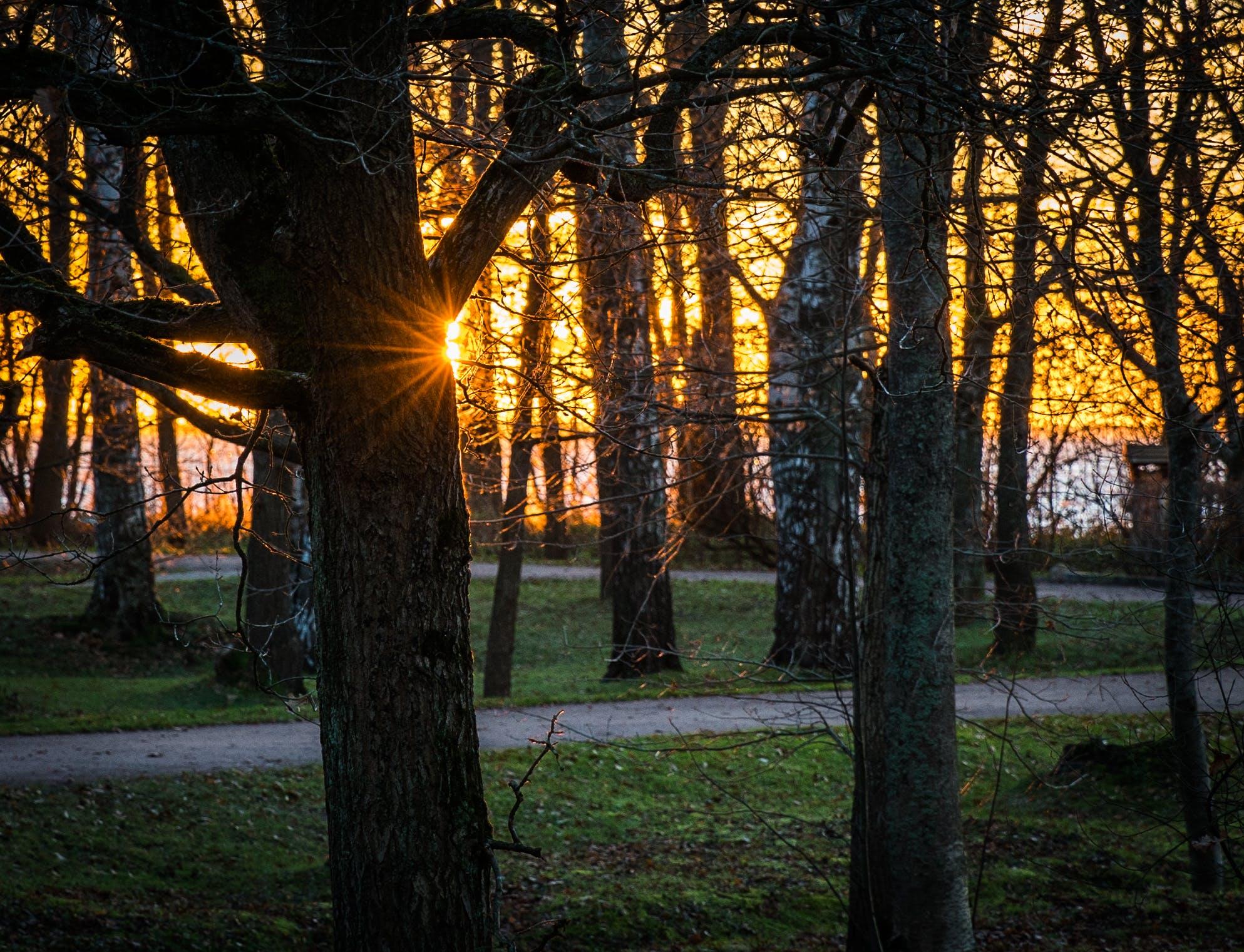 Foto d'estoc gratuïta de alba, arbres, boira, branca