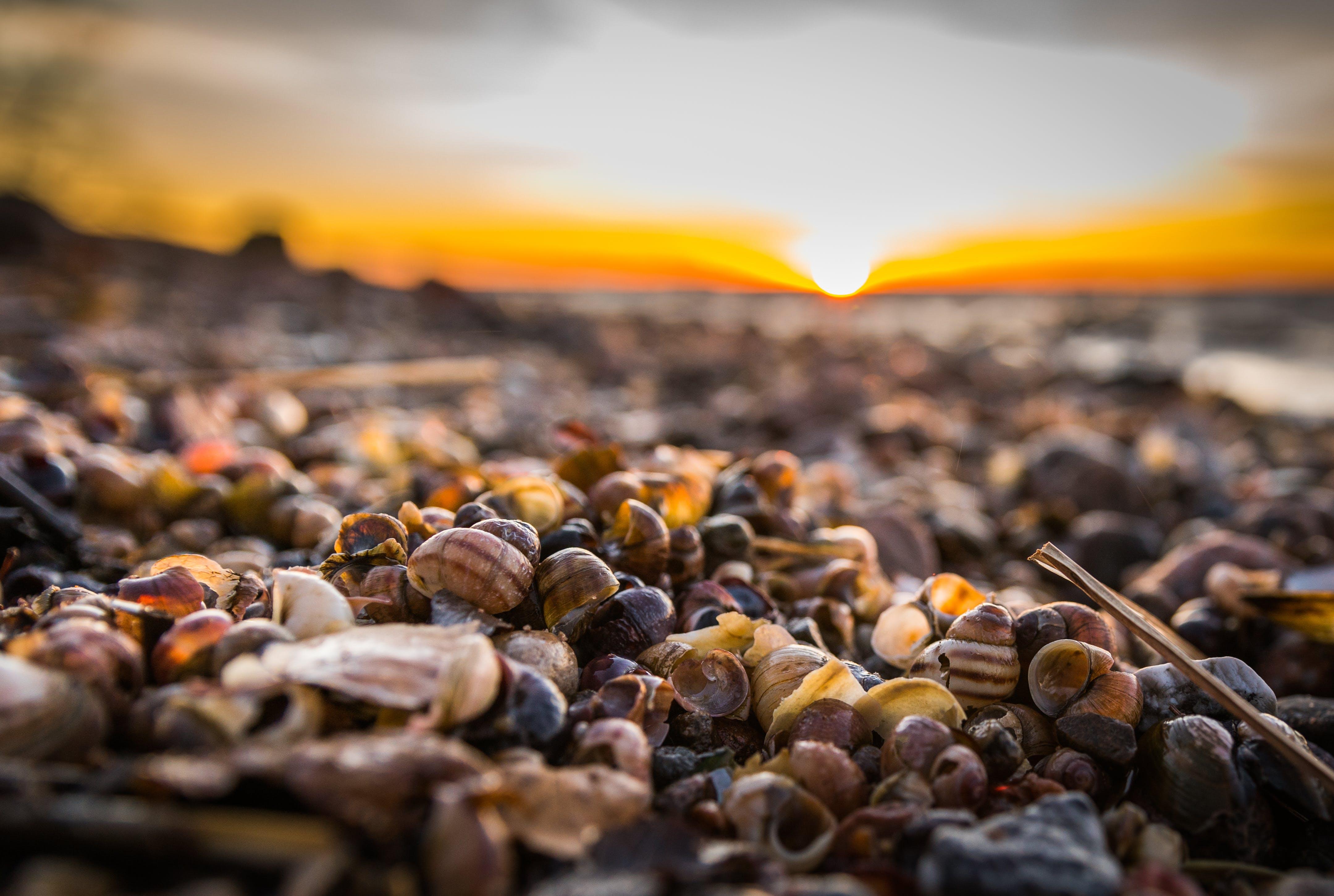 テクスチャ, パイル, 太陽, 岸の無料の写真素材