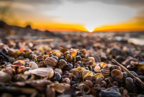 Бесплатное стоковое фото с глубина резкости, закат, куча, морской берег