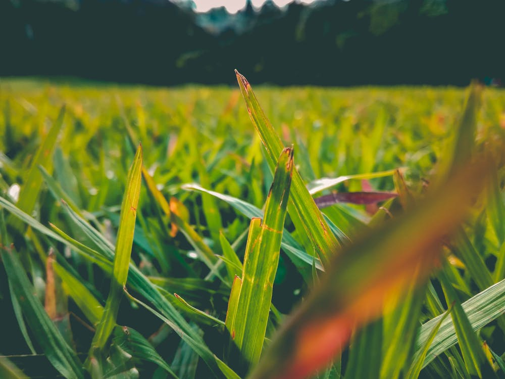 краса, Природа
