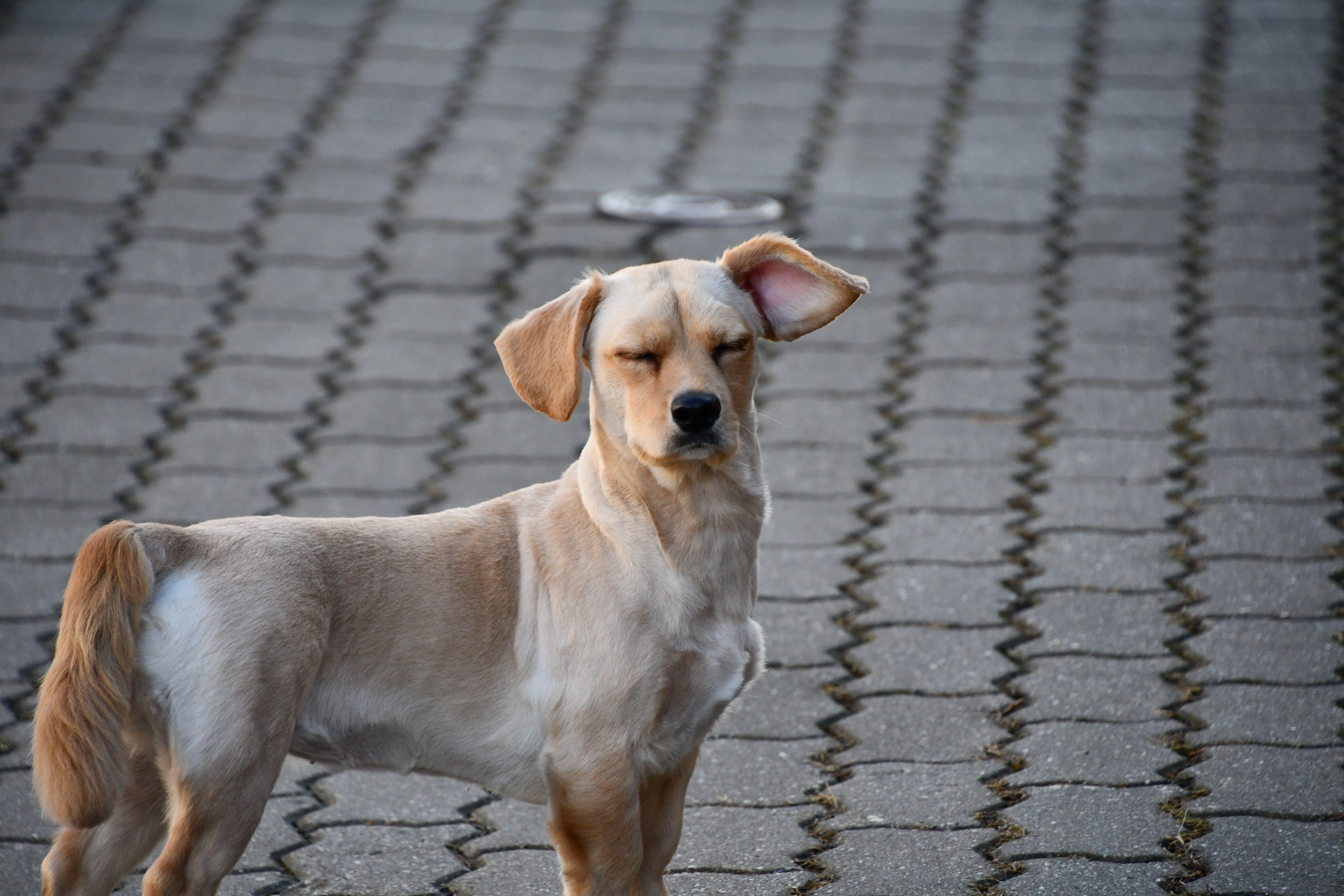 Free stock photo of animal photography, animal portrait, cute, cute animals