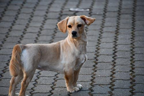 Photos gratuites de animaux mignons, blanc, chien, chien blanc