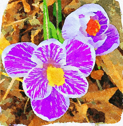 Free stock photo of easter flower, garden, hand painted drawing