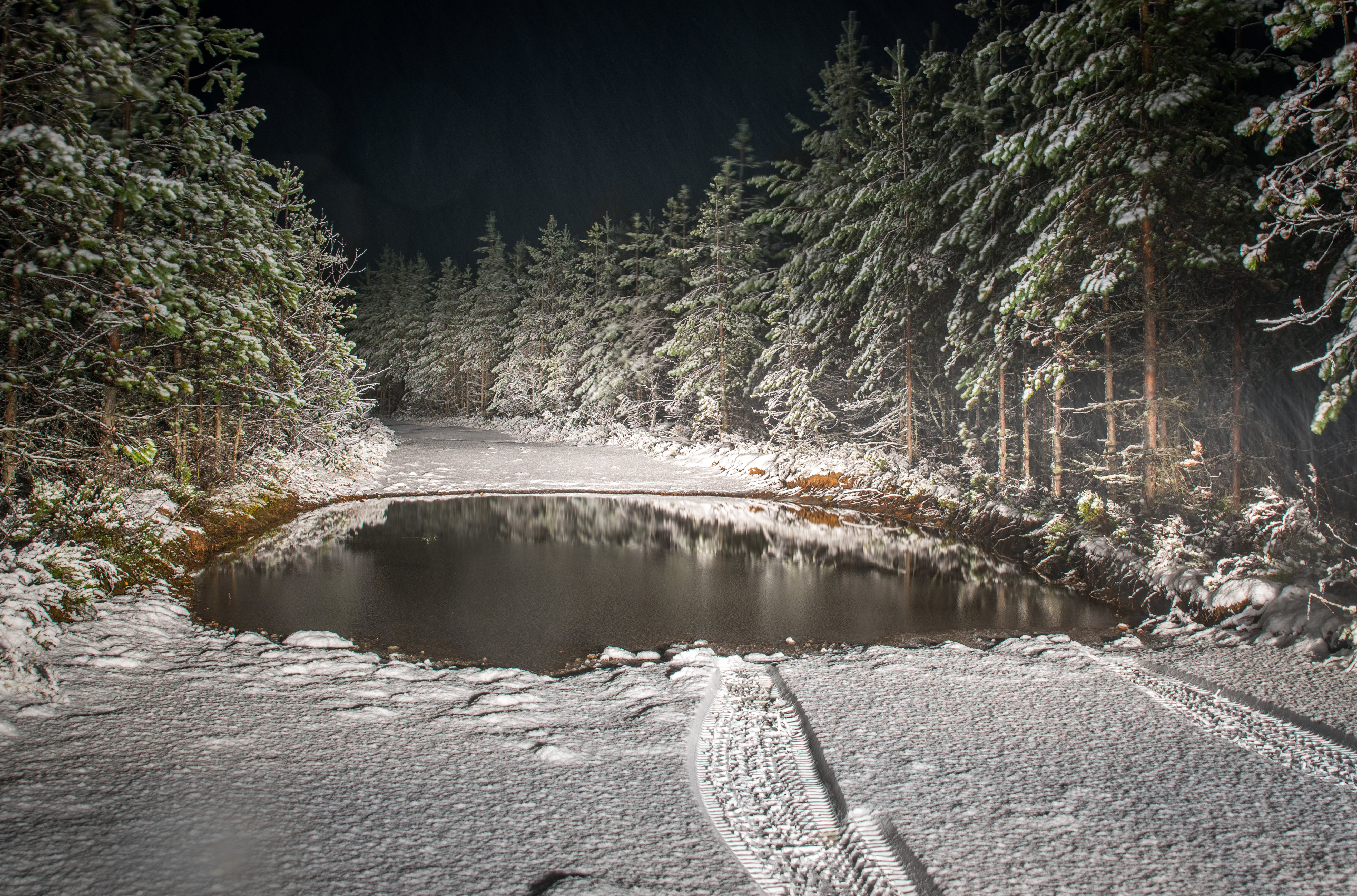 Roadway Filled by Snow Surrounded by Pine Trees Landscape Photography