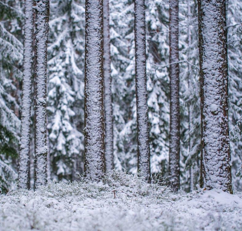 bäume, eis, eisig